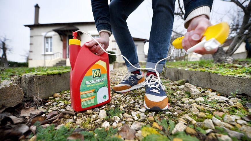 La mairie de Cherbourg-en-Cotentin va notamment sensibiliser les particuliers contre les pesticides de synthèse.