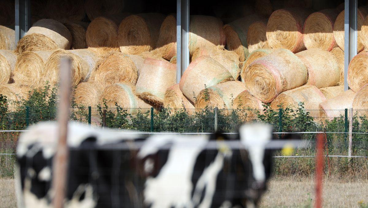 Agribashing : un collectif d'agriculteurs veut reconnecter ville et campagne par téléphone
