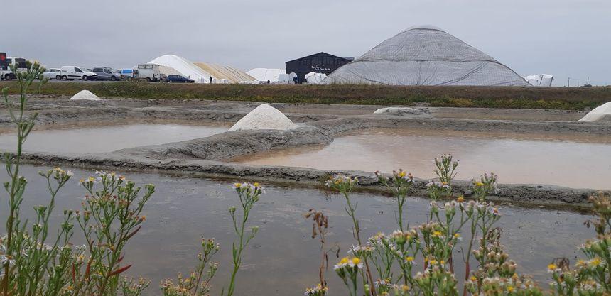 """Le """"gros tas"""" de 3300 tonnes à droite, et le petit, 1000 tonnes à gauche, le produit de l'été."""