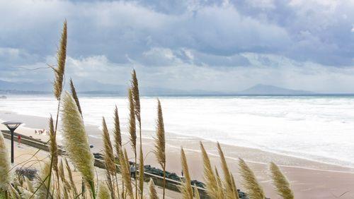 Golfe de Gascogne, entre richesse insoupçonnée et pression sur le vivant