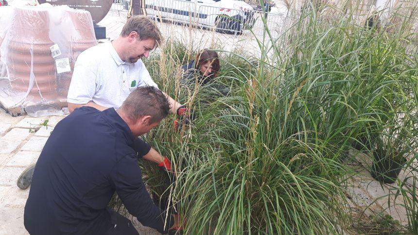 Des apprentis de l'école d'horticulture de Roville-aux-Chênes participent à l'installation