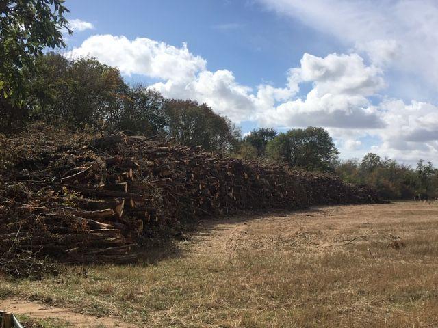 Les bois coupés du secteur de Latingy, entreposés dans l'attente d'être évacués