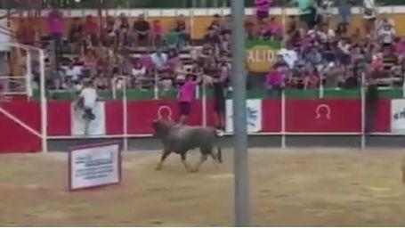 Le taureau a sauté au dessus des barrières de sécurité