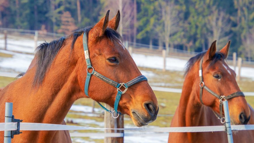 Les chevaux de la police britannique vivent une retraite paisible en Périgord Vert