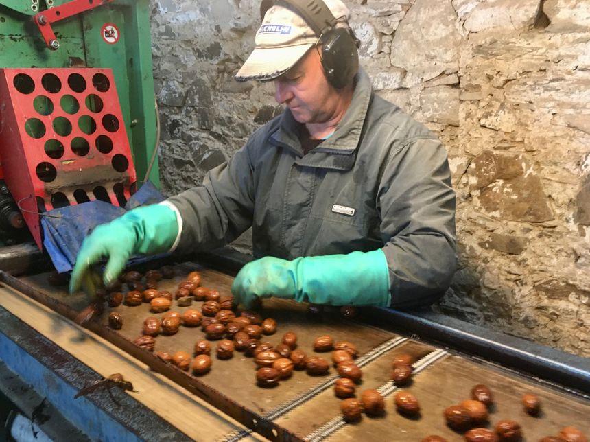 Les noix doivent être soigneusement lavées et triées avant d'être séchées