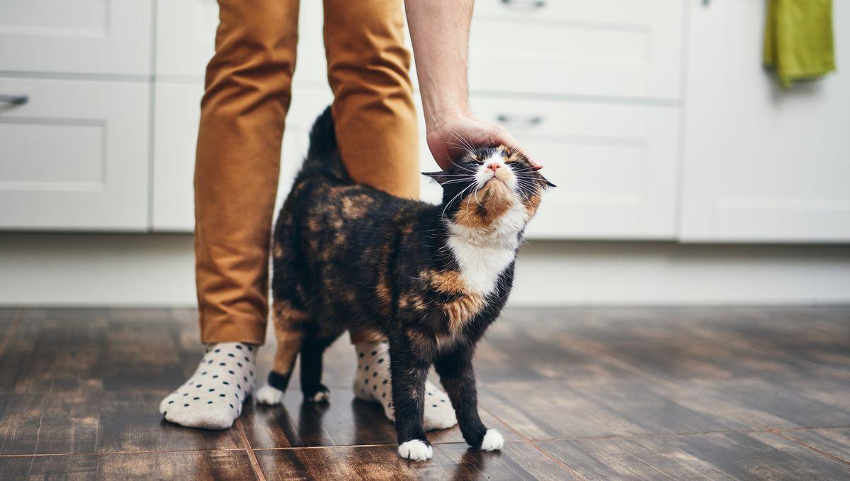 Les Conseils Pour Adopter Un Chat