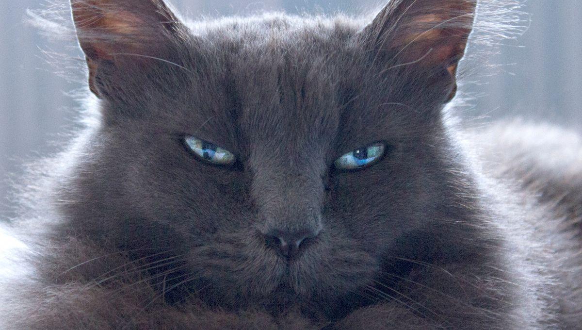 Haute-Saône : le serial killer de chats jugé en janvier