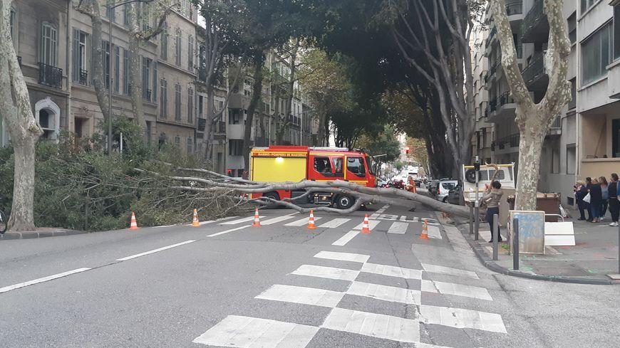 Un arbre est tombé avenue de la Corse à Marseille