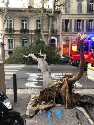 La chute de l'arbre n'a pas fait de blessé