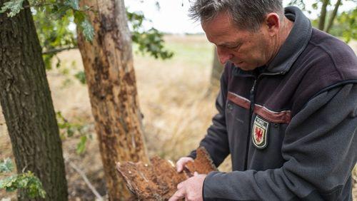 Forêts françaises : de la catastrophe écologique à la crise économique ?