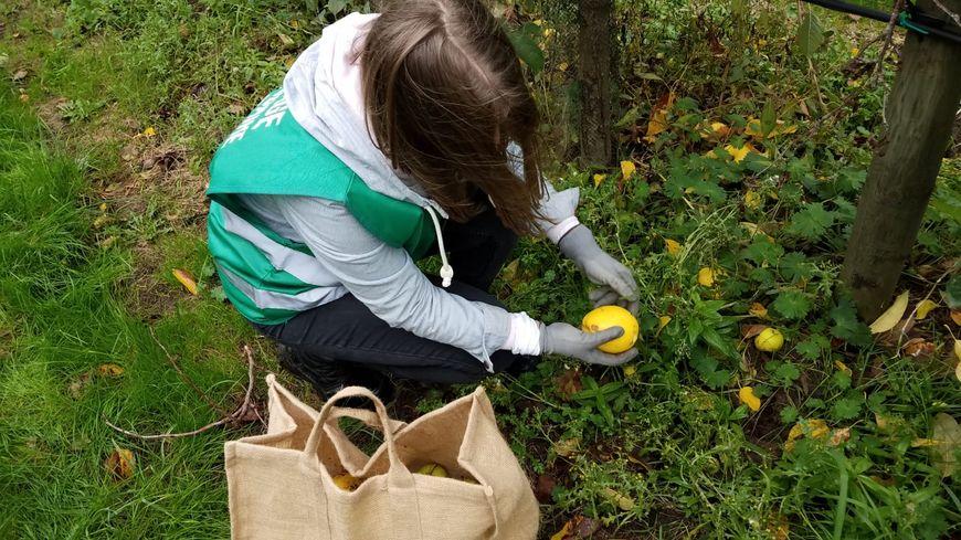 Maëlle Carrel privilégie les pommes tombées de l'arbre, car elle est sûre qu'elles sont mures.