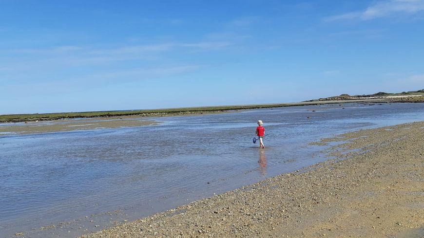 Un enfant à la pêche à pied pendant les grandes marées (illustration)