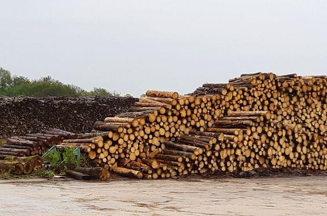 Certains s'inquiètent d'uen baisse des revenus liée à la diminution des coupes de bois
