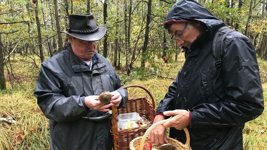Sollicitez un connaisseur des champignons quand vous avez un doute sur les variétés que vous ramassez