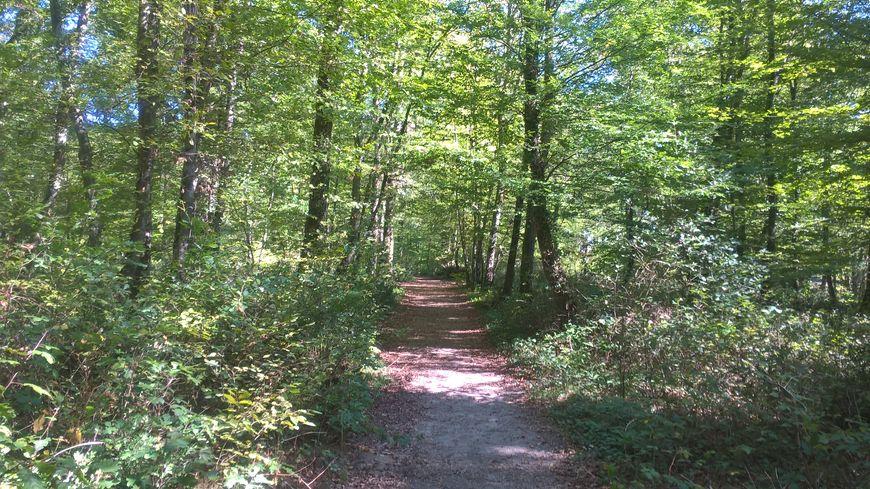 Le corps a été retrouvé sur un chemin, non pas en pleine forêt de Bouconne, mais à proximité.