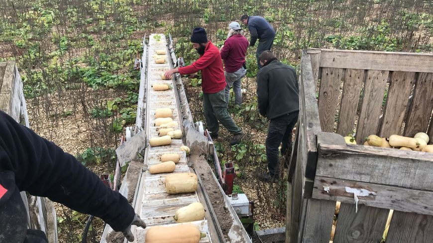 C'est le dernier jour de récolte dans les champs de Christophe, à Noyers