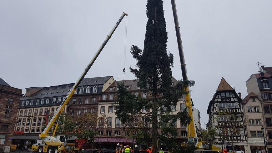 Le sapin de Noël de Strasbourg 2019