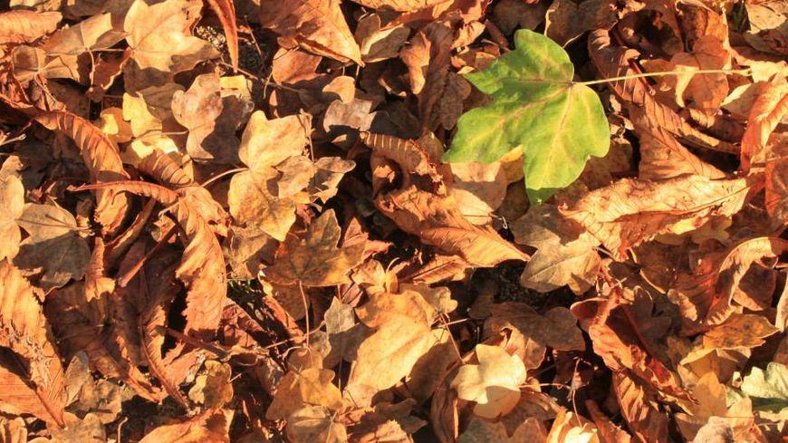 Les feuilles mortes et l'humidité posent de gros problèmes d'adhérence sur les rails(photo d'illustration).