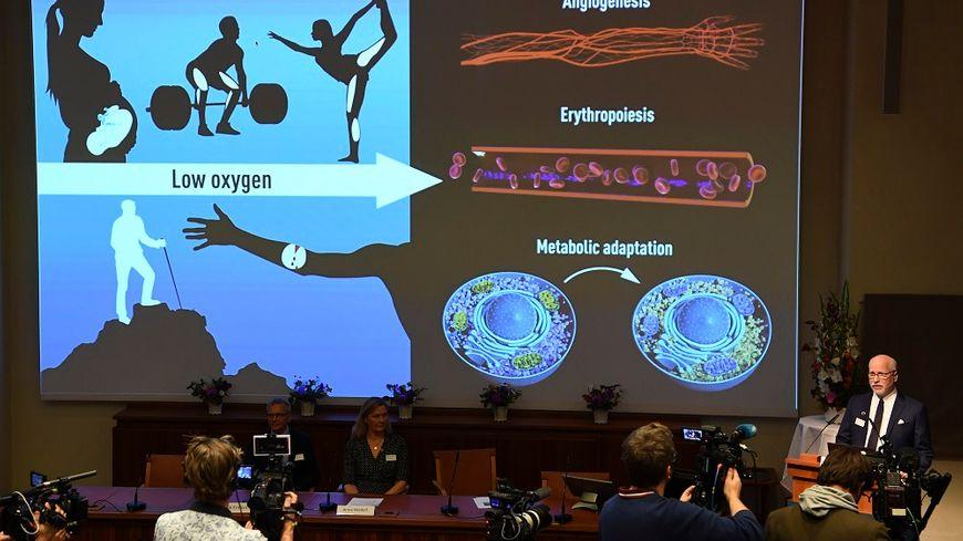 Les recherches des lauréats du prix Nobel de médecine présentées ce lundi à Stockholm, en Suède.