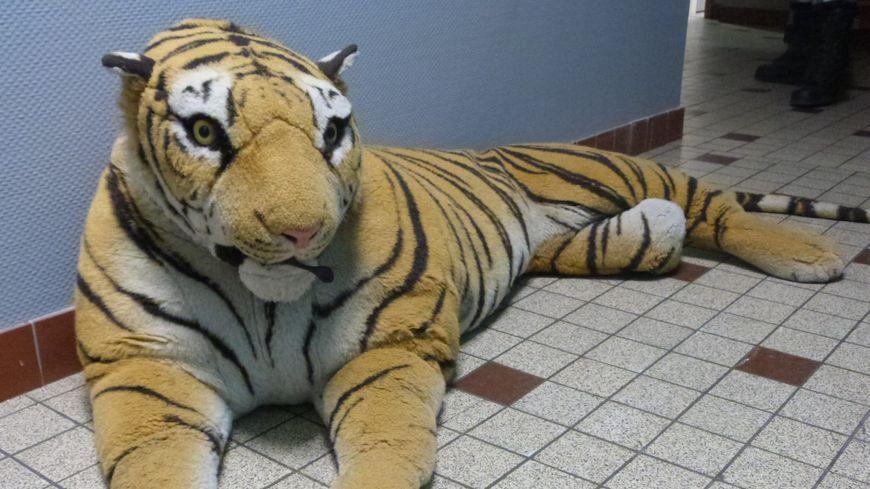 Les policiers du Mans ont préféré capturer le tigre en peluche pour mettre fin aux appels au 17 (illustration)