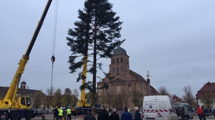 Le sapin de Noël a été installé ce jeudi après-midi place d'Armes à Neuf-Brisach