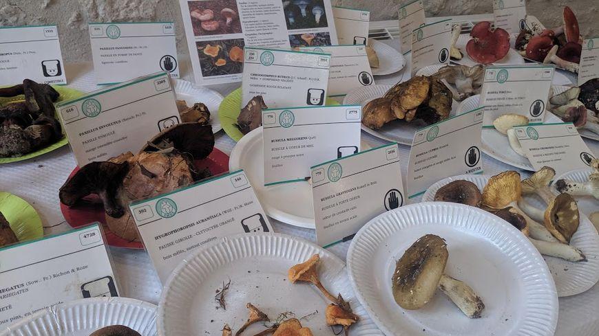 Des dizaines d'espèces étaient exposées ce week-end au salon du Champignon de Saint-Jean-le-Blanc.