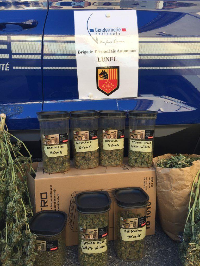 Les gendarmes ont saisi des bocaux où étaient stockés le cannabis