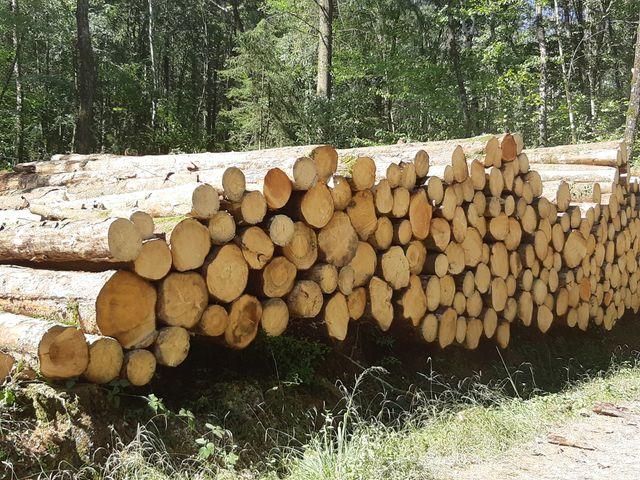 Coupe de bois dans une forêt de Haute-Marne.
