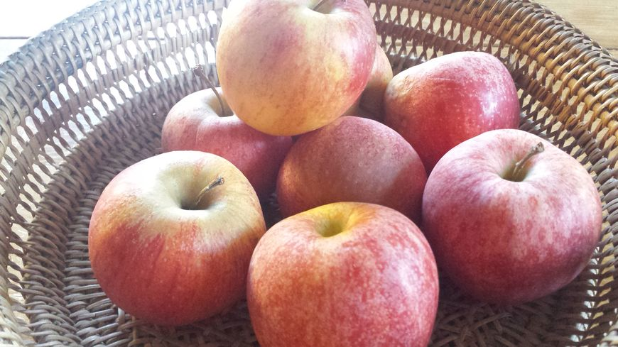 Pomme fruit