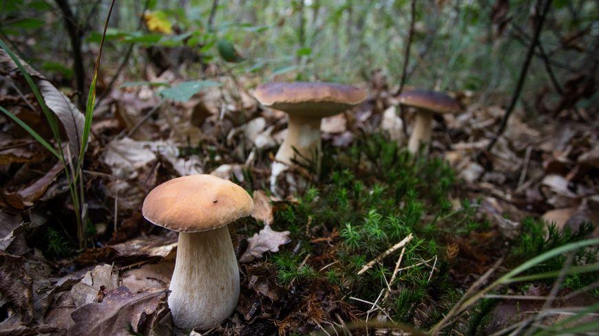 Attention à ne pas vous perdre en foret si vous allez aux champignons