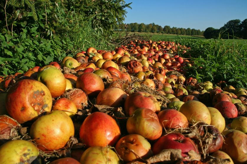 Pertes alimentaires : 13,8% de la production agricole mondiale est jetée avant même sa vente