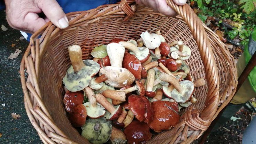 Après Lubrizol, pas de cueillette et surtout de consommation de champignons selon Philippe Vérité, du comité de mycologie