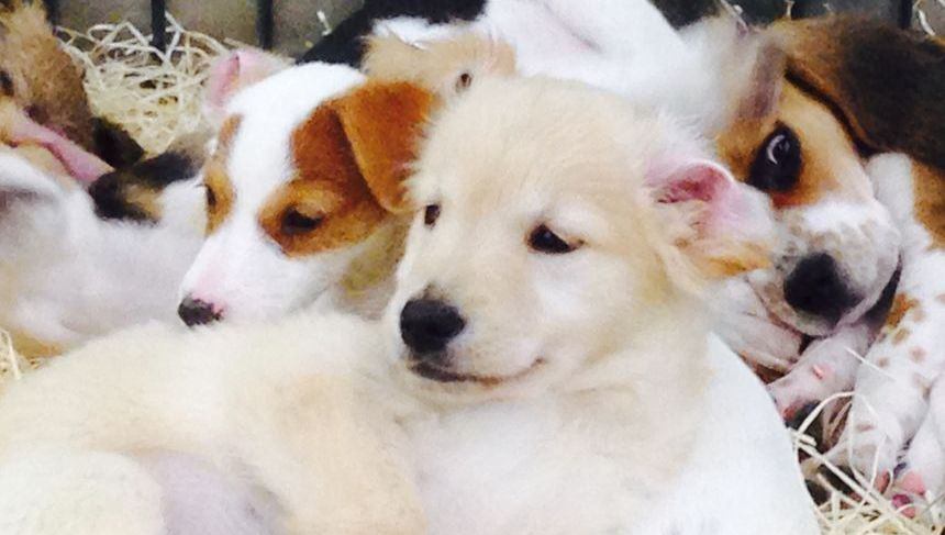La parvovirose, pas encore d'épidémie en Drôme et en Ardèche, mais une menace pour votre chien