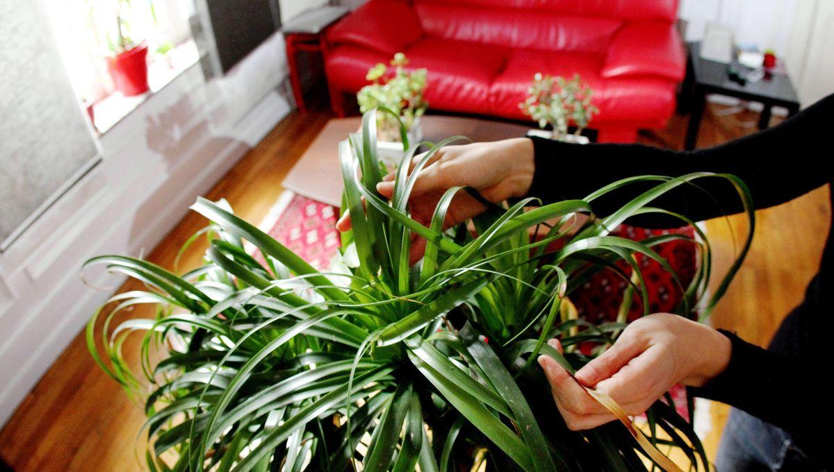 """Journée spéciale """"qualité de l'air"""" : les conseils d'une experte pour votre intérieur"""