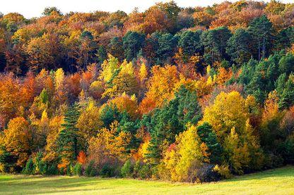 Plus de 240.000 hectares de forêts dont 80 % étaient présents à la révolution française