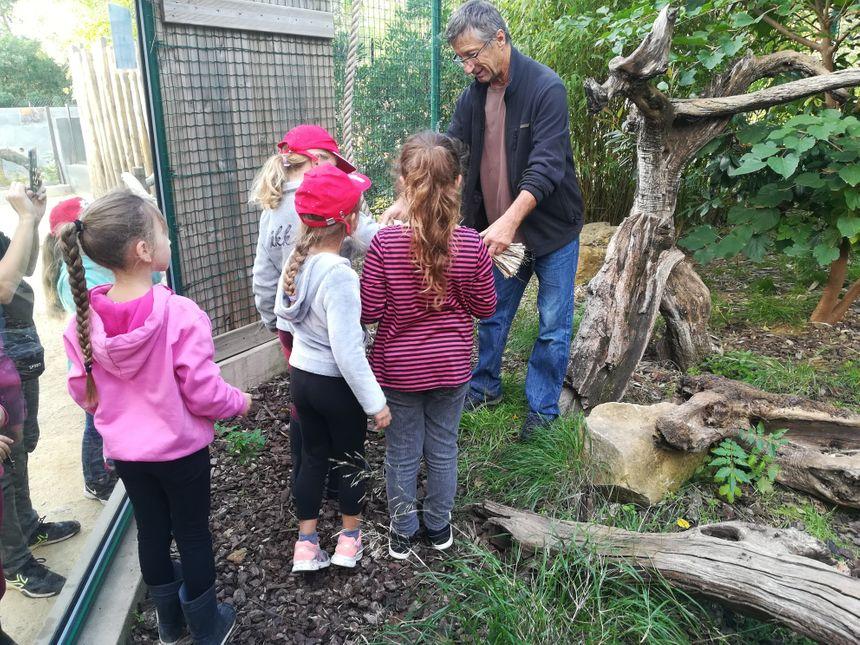 Avant l'arrivée des félins, les enfants sont entrés avec le soigneur dans l'enclos des ocelots