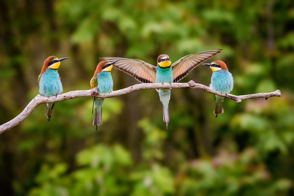 Haïku de printemps - Page 18 1136_oiseaux_gettyimages-980031910