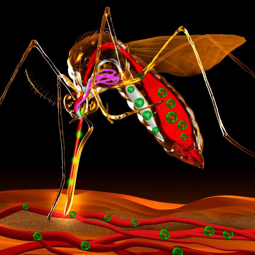"""""""Zika : le pacte du moustique et du virus"""" - Ép. 7/8 - Épidémiologie, problématiques et enjeux"""