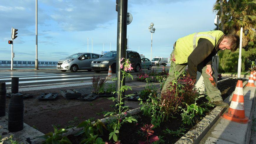Planter des arbres le long des axes routiers très fréquentés diminue la pollution de l'air.