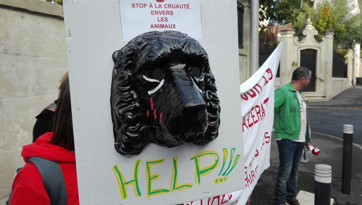 Manifestation à Périgueux pour la fermeture d'un élevage de chiens de chasse