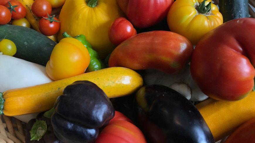 Panier de légumes d'été.