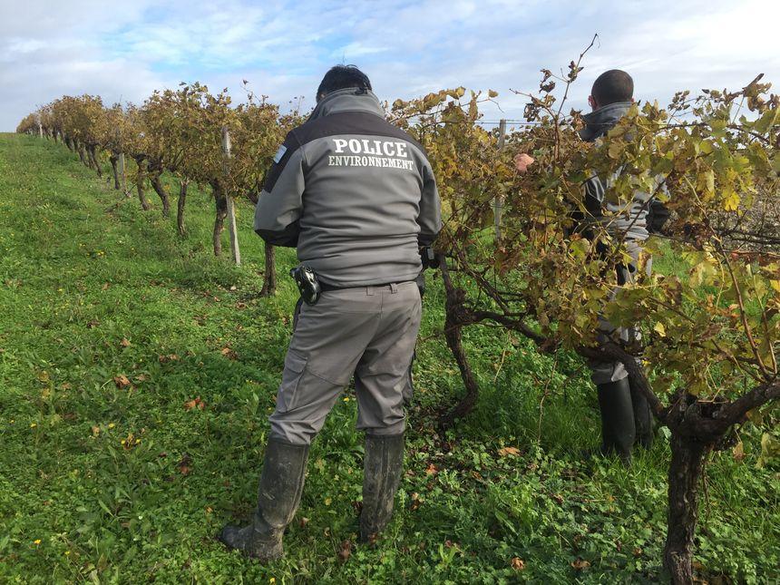 Guillaume Rulin et son collègue ont épluché toute une parcelle de vignes