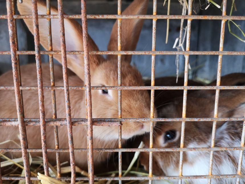 La médiation animale fait partie du projet porté par l'association