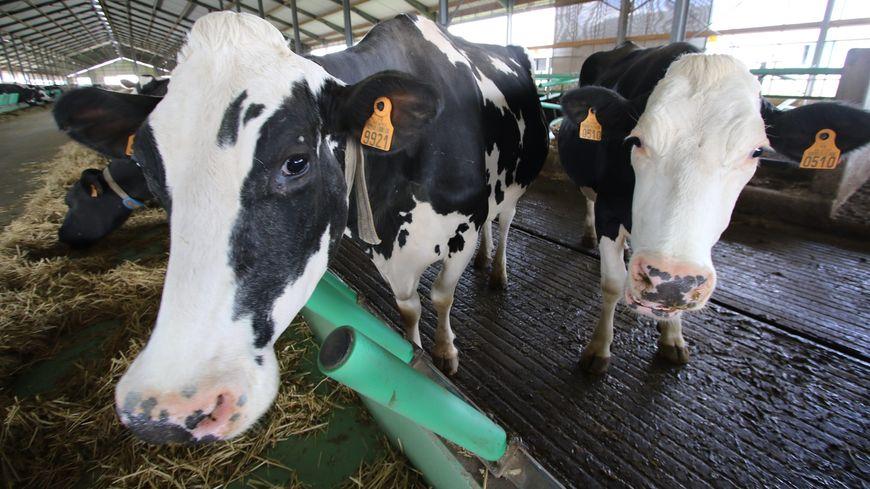 """La ferme dite des """"1000 vaches"""" à Drucat dans la Somme. Son exploitant attaque en justice l'Etat pour excès de zèle"""