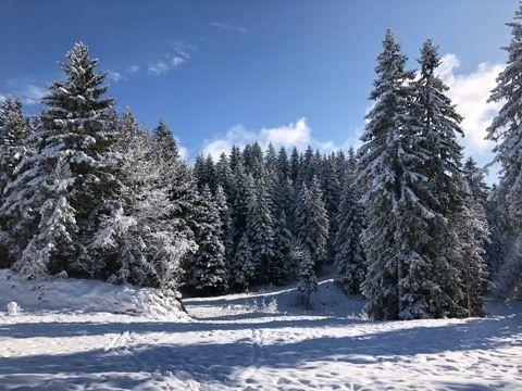 Il y a près de 30 centimètres de neige.