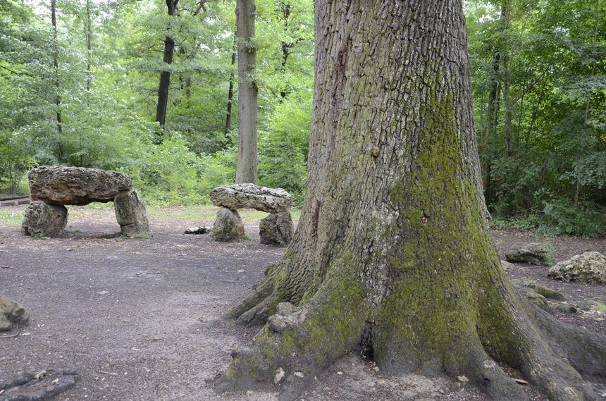 Le chêne des Missions, dans la forêt de Meudon dans les Hauts-de-Seine.