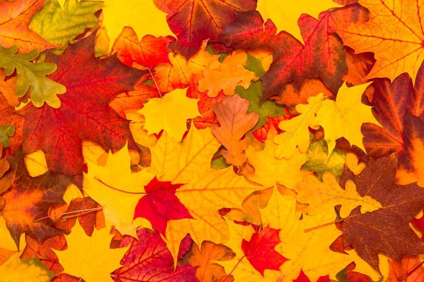 L'automne est la saison de la lecture