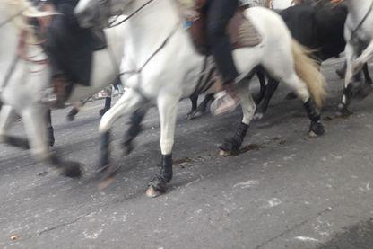 Les chevaux Abrivado pendant la Féria du riz à Arles.