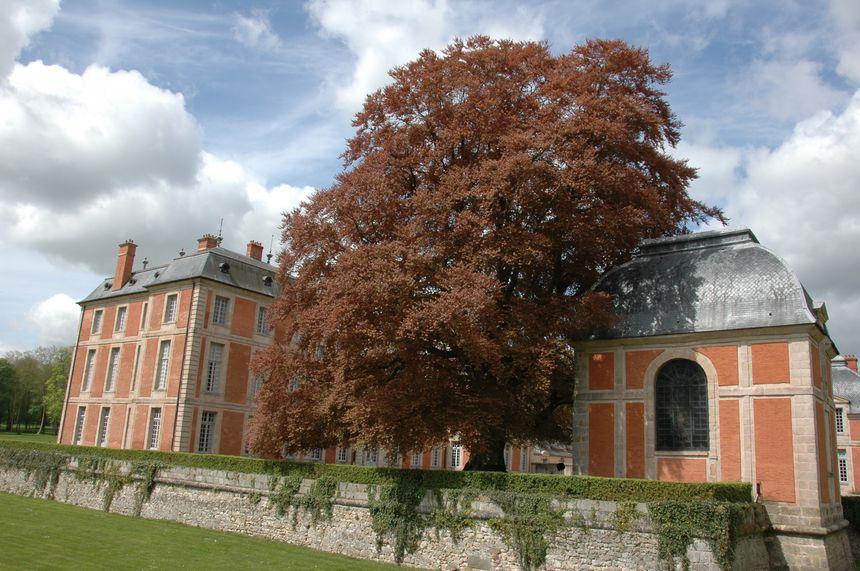 Le platane et le hêtre pourpre du parc de Chamarande en Essonne.