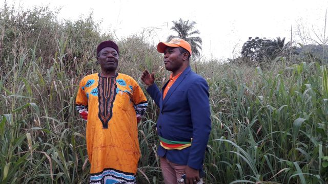 """Le maire de Tonga (à droite) veut """"reboiser utile"""". Ici des plants de maïs cohabitent avec des pruniers."""